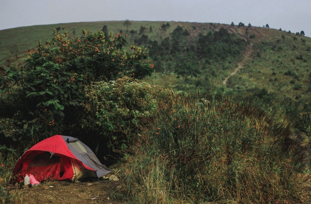Setting up a tent in front of a bush